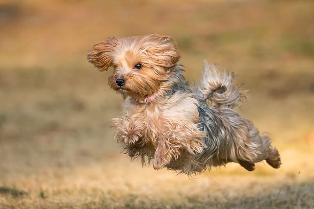 Running Dog 3832