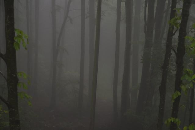 fra la nebbia