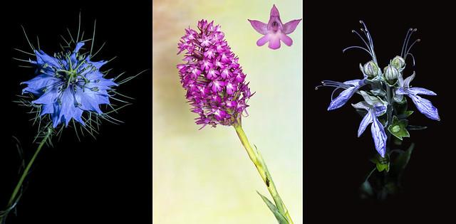 Flores (Tres macros)
