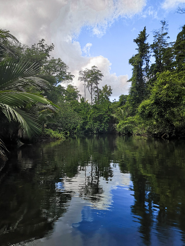 viidakko (7)