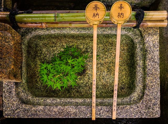 Tsukubai (蹲踞) water basin with maple leaves