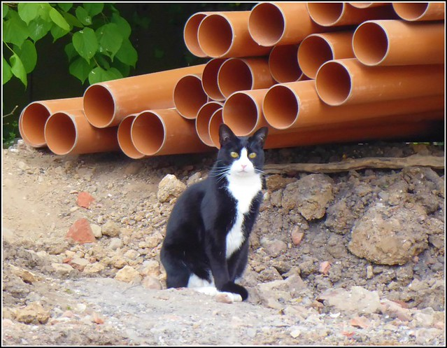 Cat Among The Pipes ...