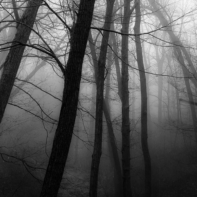 Forest In Fog 025