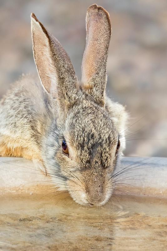 Rabbit-3-7D2-051620