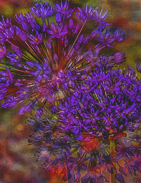 Impressionist Effect of Flowers in Multi-Exposure In-Camera Artistic Effect Created by Nolan H. Rhodes (Nikon D7500 50.0-150.0 mm f/2.8 ƒ/10.0  102.0 mm 1/200  ISO200)