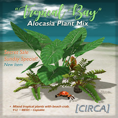 "[CIRCA] - ""Tropical Bay"" Alocasia Plant Mix (SSS)"