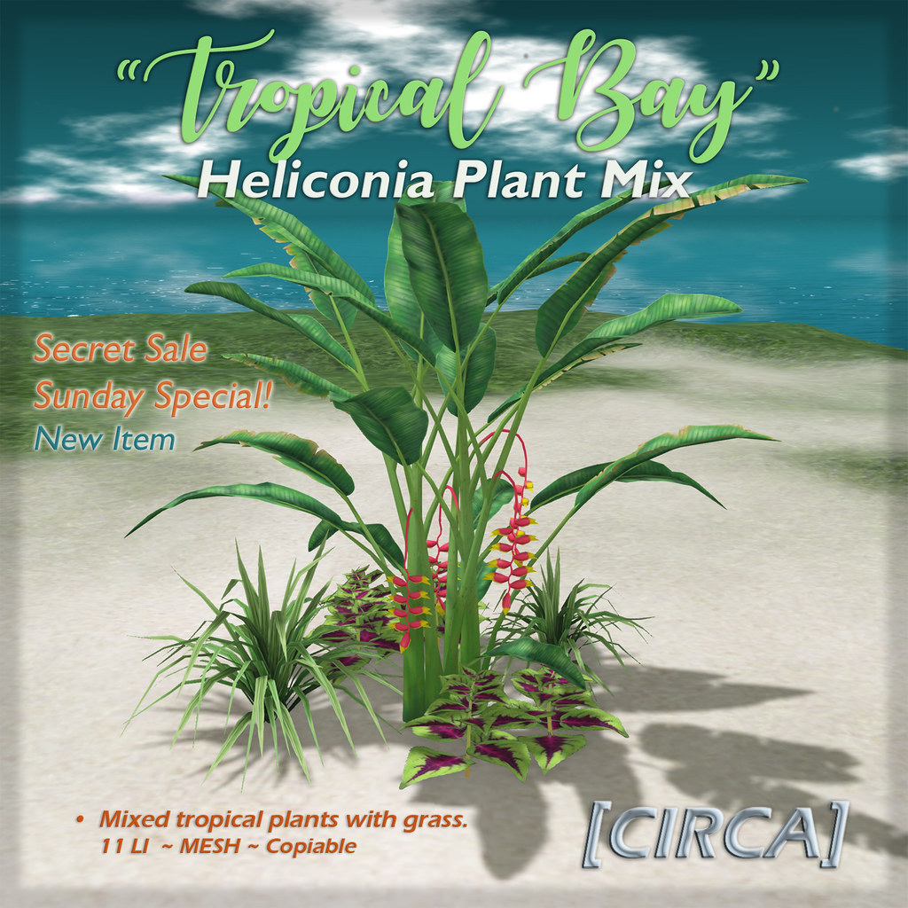 """[CIRCA] - """"Tropical Bay"""" Heliconia Plant Mix (SSS)"""