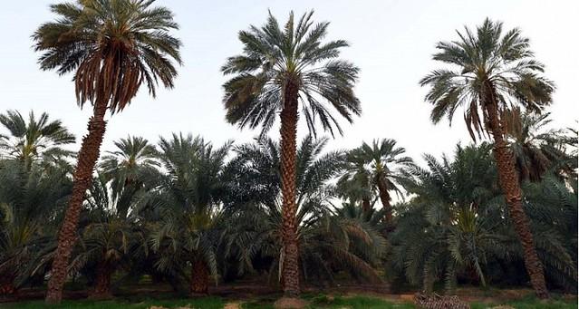 4295 1400 years old Uthman bin Affan well in Madina that still flows water 04