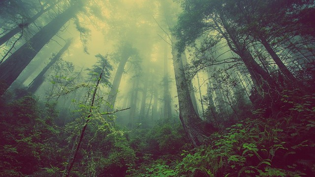 Forest Mist Nature Trees Mystic Atmosperic Fog