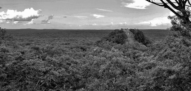 MEXICO, Mayastätte Calakmul, inmitten eines unendlich scheinenden Dschungels. verborgen, versteckt im tiefen Urwald , Blick auf die Struktur 1 die höchste Tempelpyramide, welche den grünen Dschungel überragt , grandios, 19750/12674