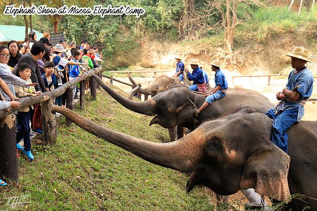 Elephant Show Maesa Elephant Camp
