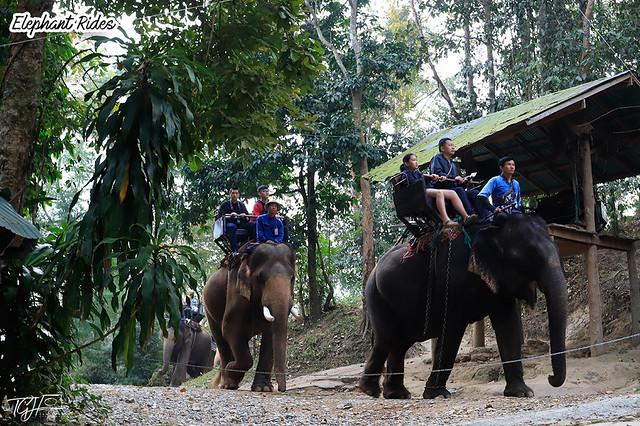 Maesa Elephant Rides