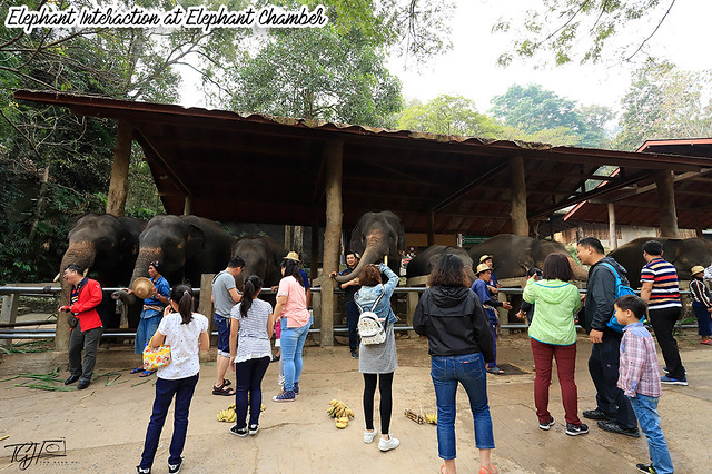 Maesa Elephant Chamber