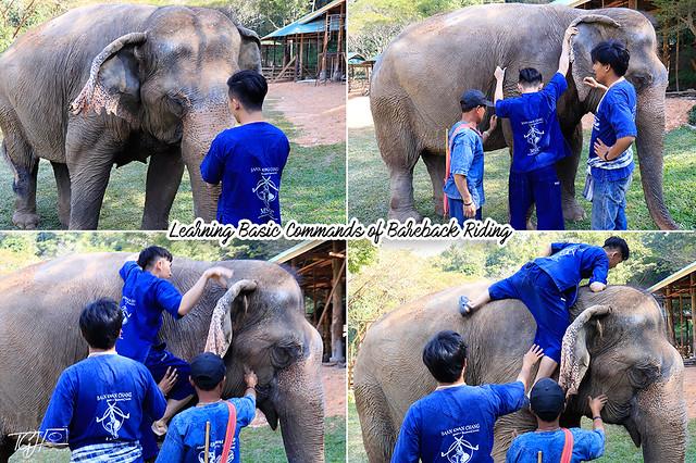 Bareback Elephant Riding