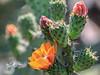 Los Flores de Lomas del Marques