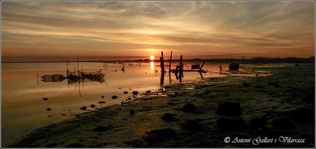 El Sol em mira... (Delta de l'Ebre - Catalunya).