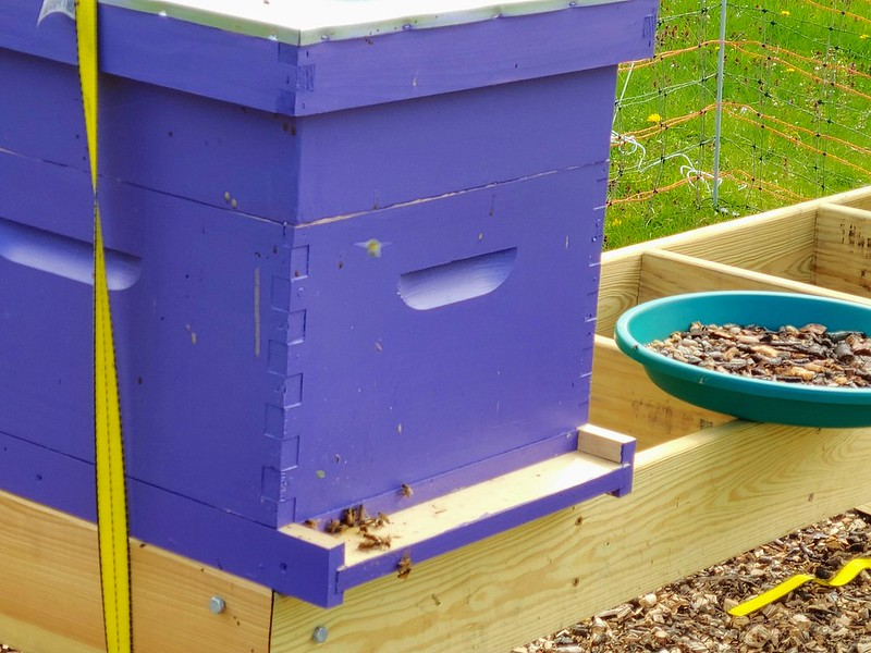 Purple beehive with bee waterer