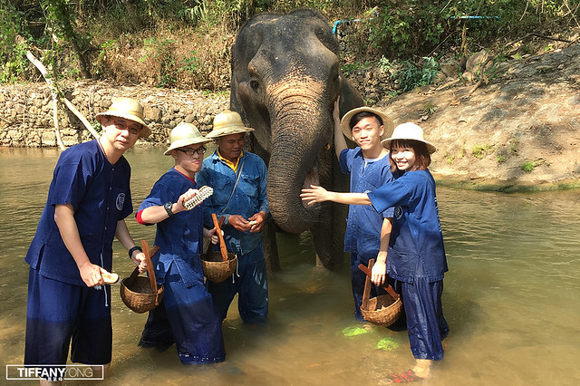 EpiphanyGoChiangmai Maesa Elephant Camp