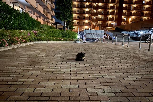 Today's Cat@2020ー05ー18