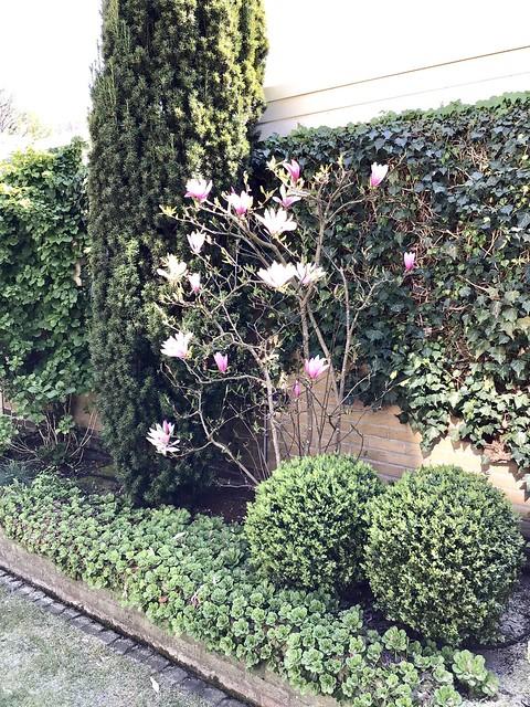 Border landelijke tuin met buxus