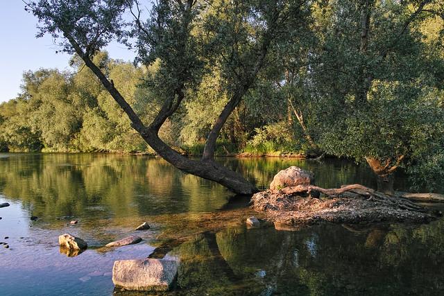 Naturschutzgebiet Unterer Neckar #8