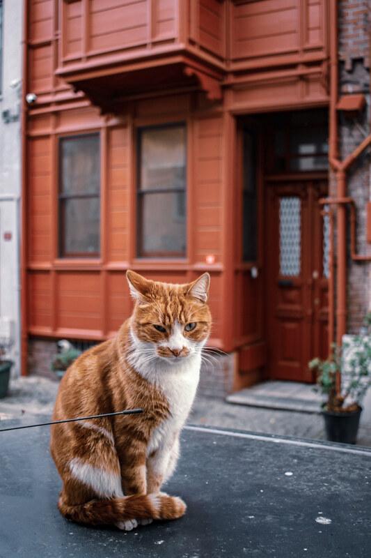 gatos-estambul-12