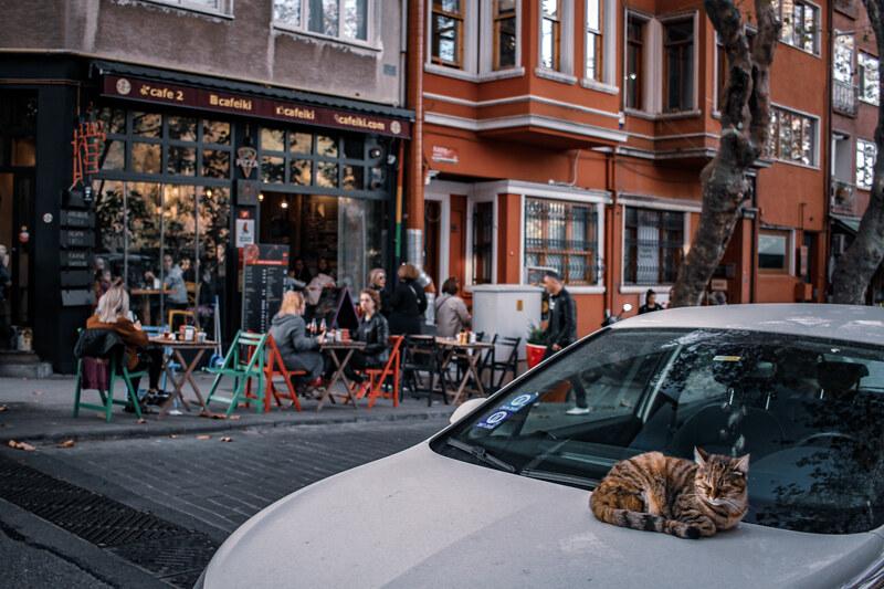 gatos-estambul-11