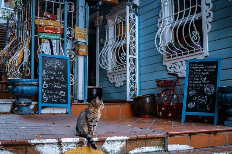 gatos-estambul-8