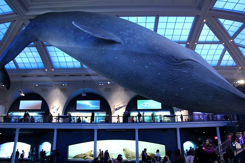 Hall of Ocean Life. From Visit the American Museum of Natural History with Kids