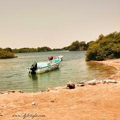 Ready to see some wildlife? . . . #travelphotography #travel #Djibouti #Summer #Sun #Beach #Beachllife #Djibouti #Eastafrica #Africa #Landscape #Paysagemagnifique #Wonderful #Wildlife #wild