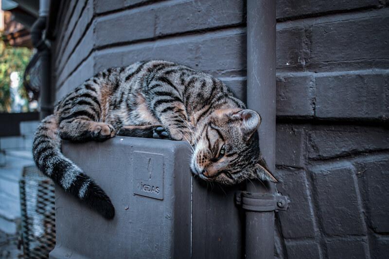 gatos-estambul-10