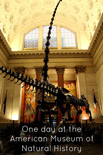 Visit the American Museum of Natural History with Kids