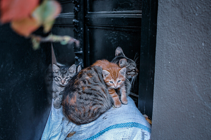 gatos-estambul-1