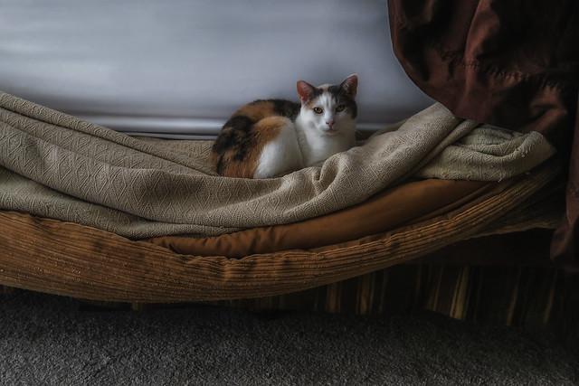 Connoisseur Of Comfort