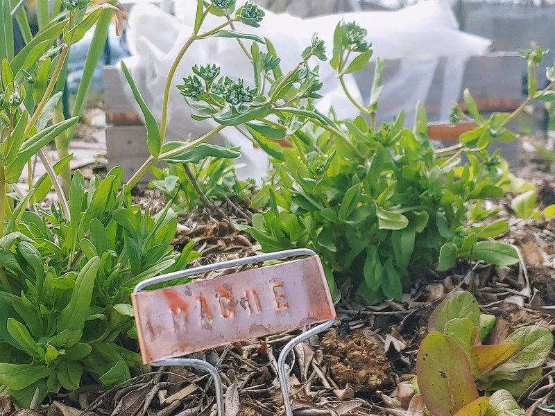 Hand-stamped Copper Plant Labels