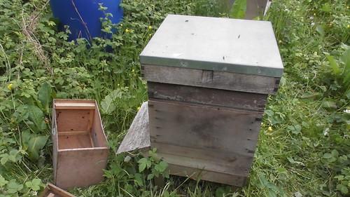 bee hive May 20