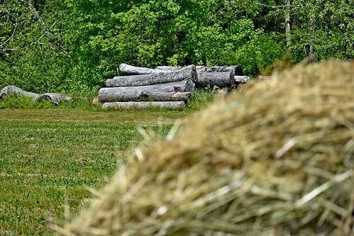 roundbale hay bale dof logs trees green baledhay lowresolutionversion ncmountainman nikon d3400 phixe