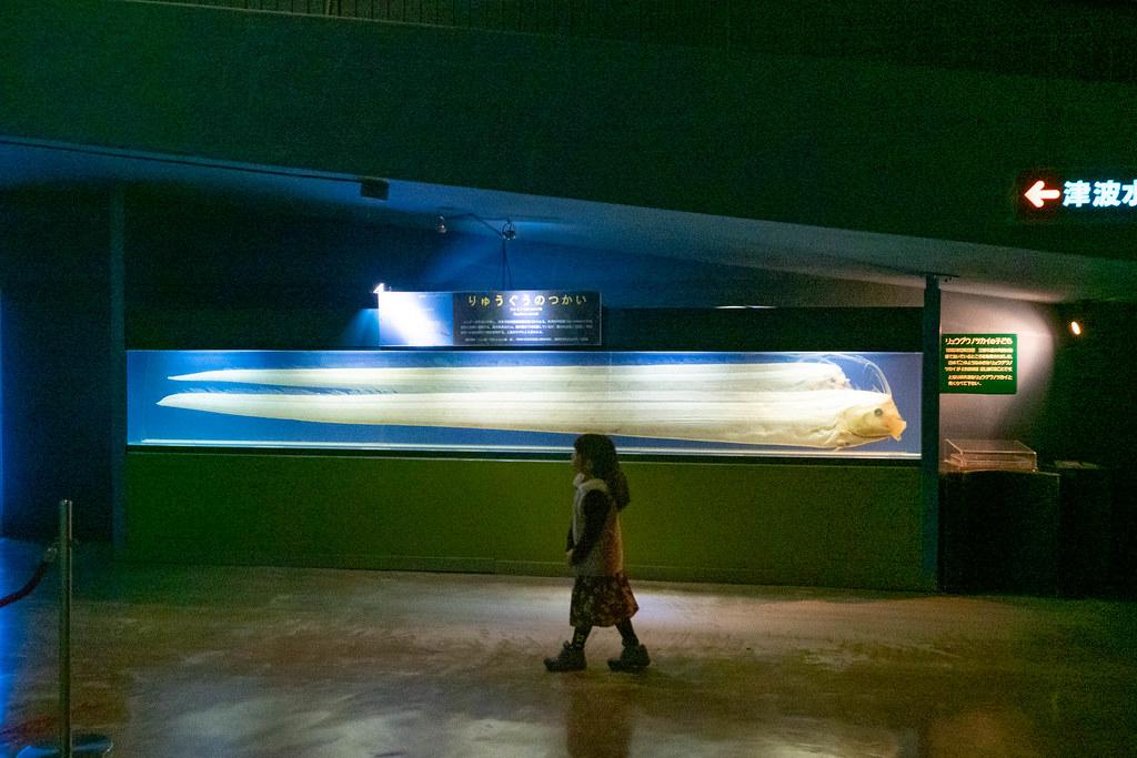 Tokaidai_Marine_Science_Museum-16