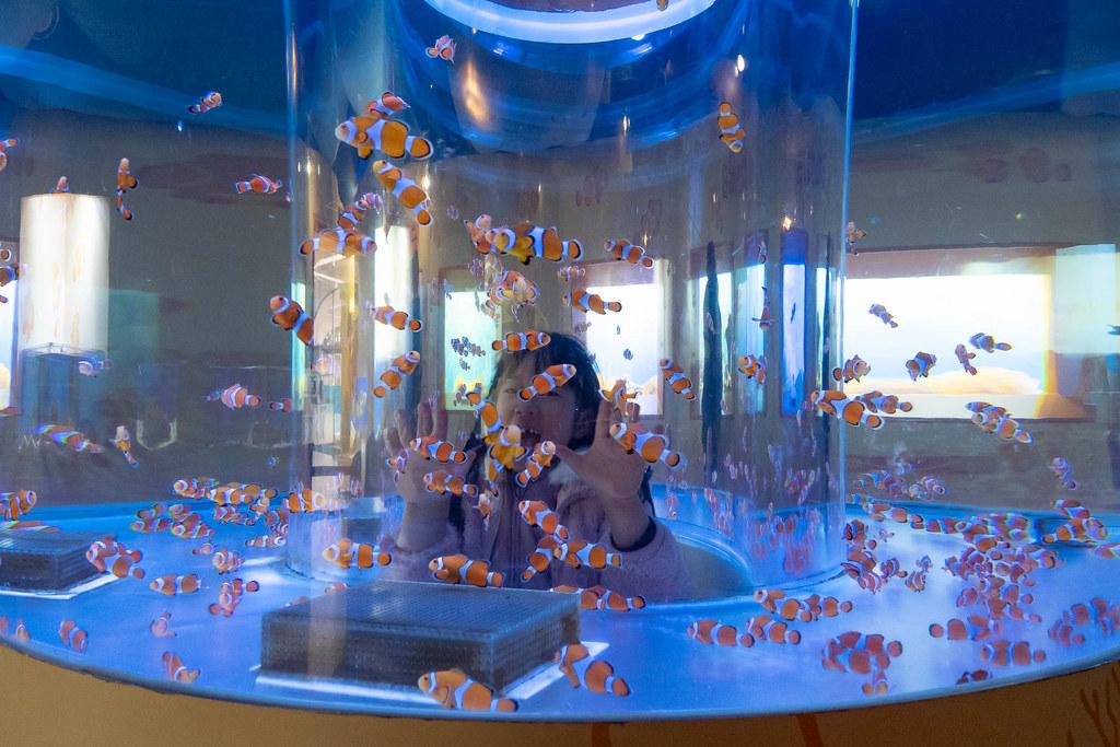 Tokaidai_Marine_Science_Museum-12