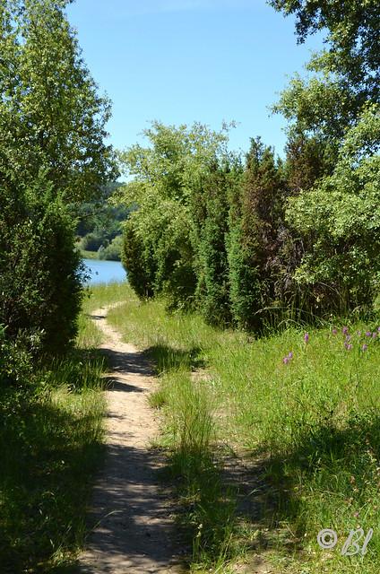 le sentier au bord du lac