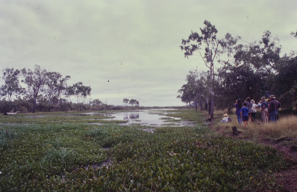 Lagoon with Eichhornia crassipes, Serpentine Lagoon, south of Townsville, QLD, 25/04/99