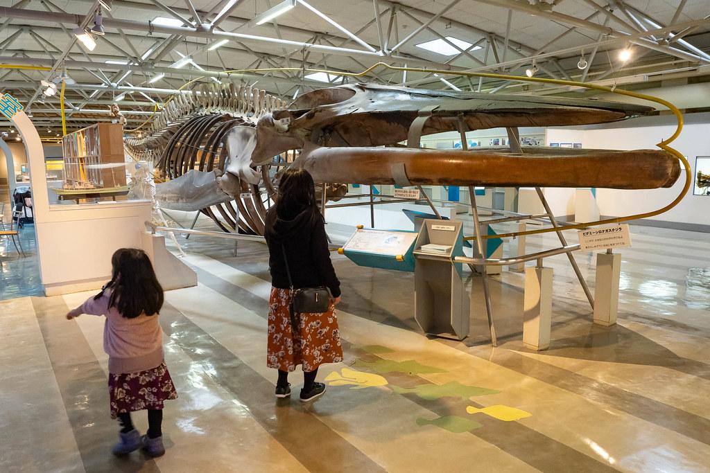 Tokaidai_Marine_Science_Museum-10