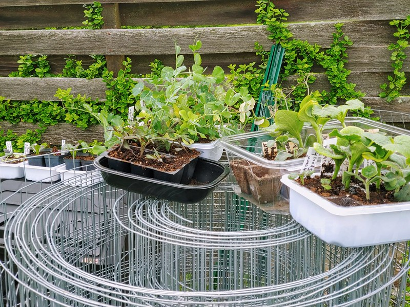 Hardening Off the Indoor Seedlings