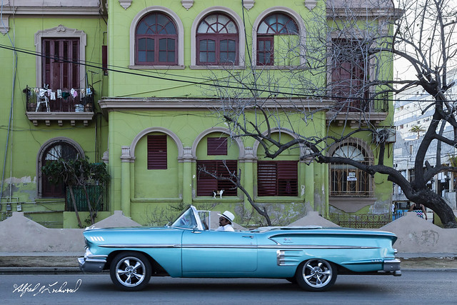 Cool Cuban Cats_MG_5690