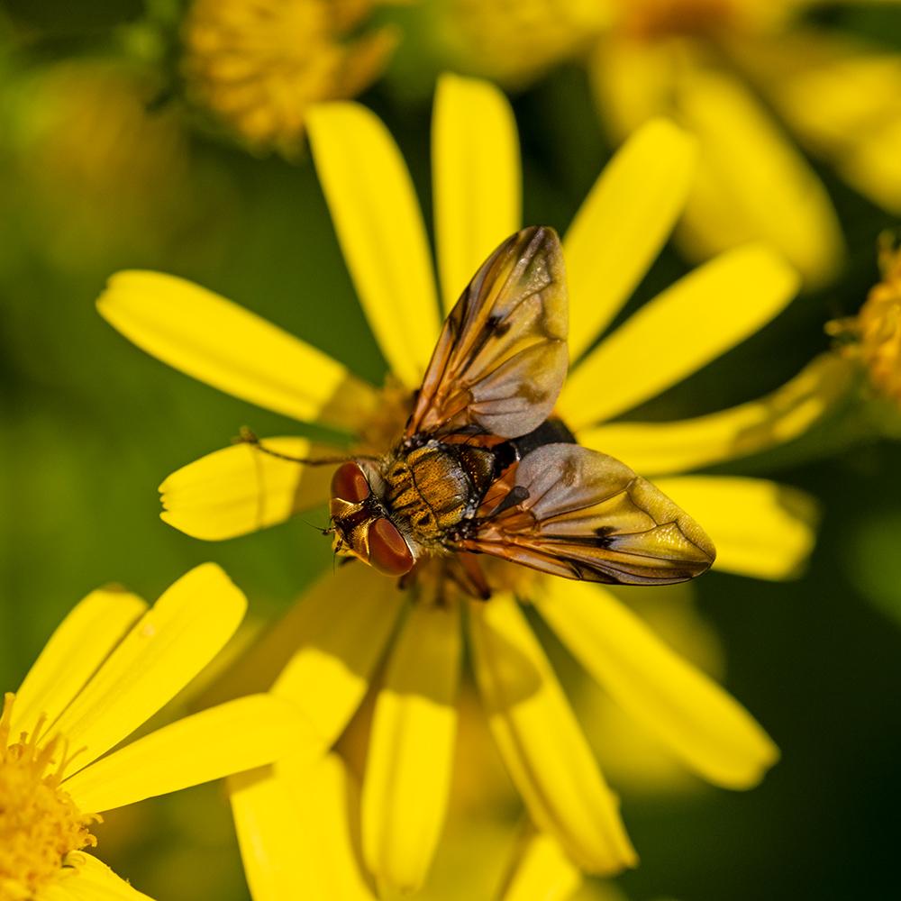 Macros/  proxi/  insectes  - Page 35 49911604263_c28ca72c21_o