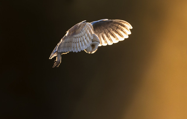 Dancing Sunbeam's and the Owl