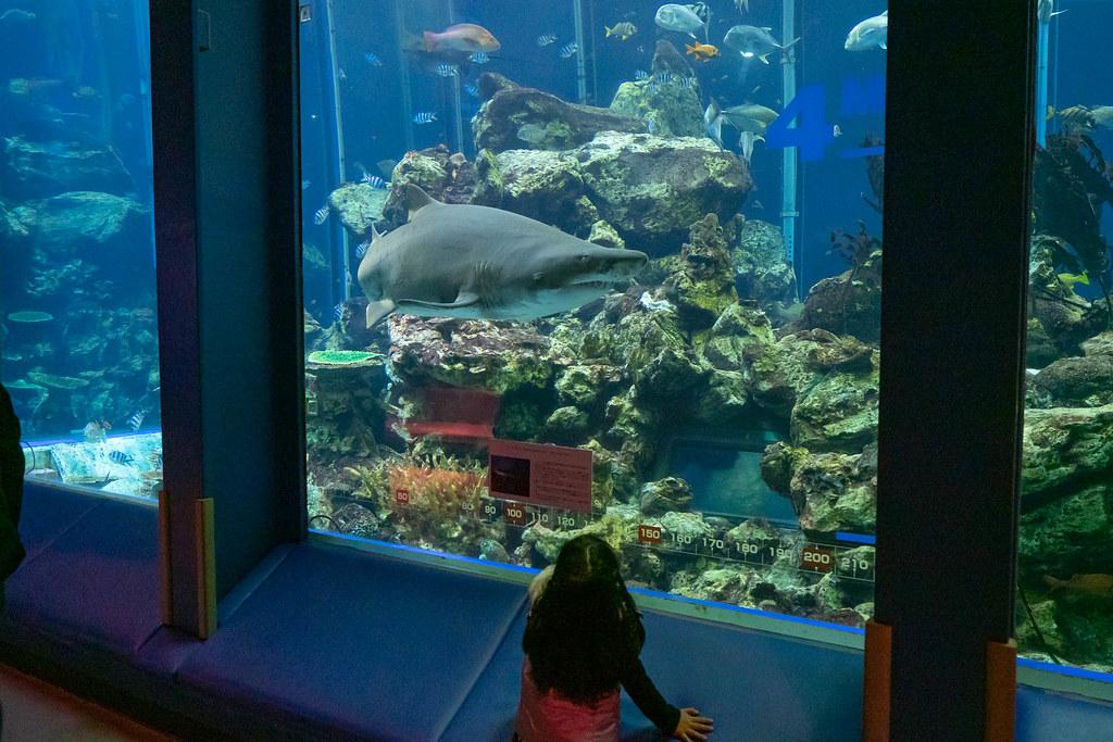 Tokaidai_Marine_Science_Museum-14