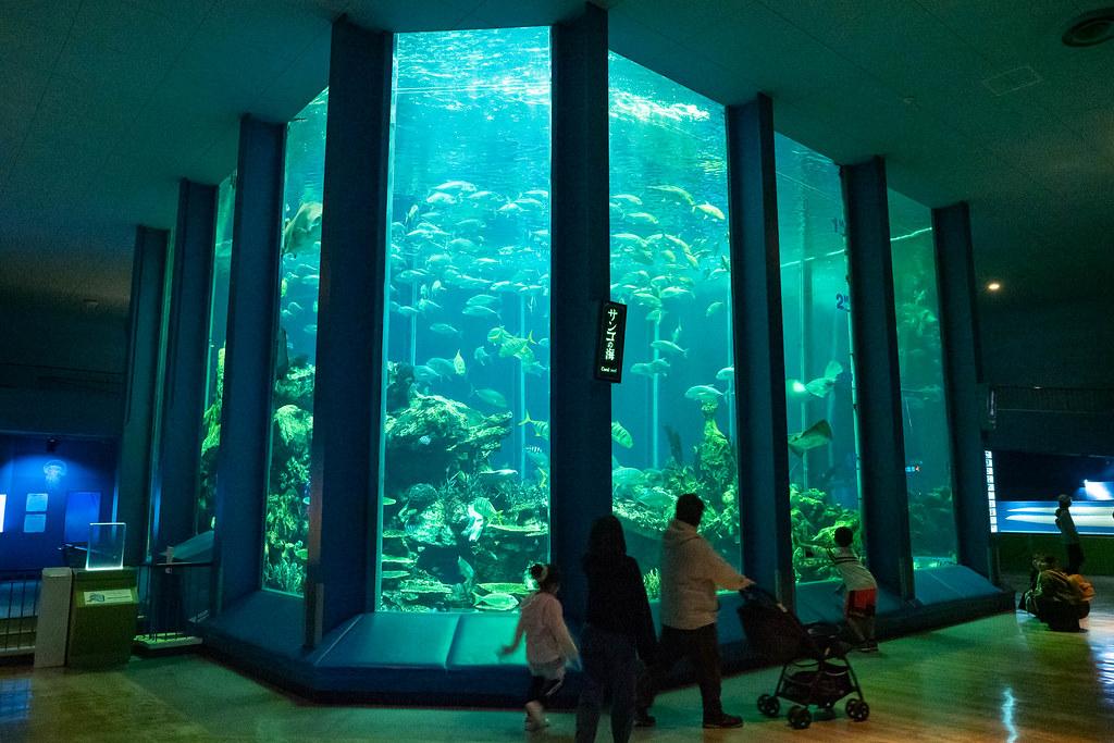 Tokaidai_Marine_Science_Museum-7