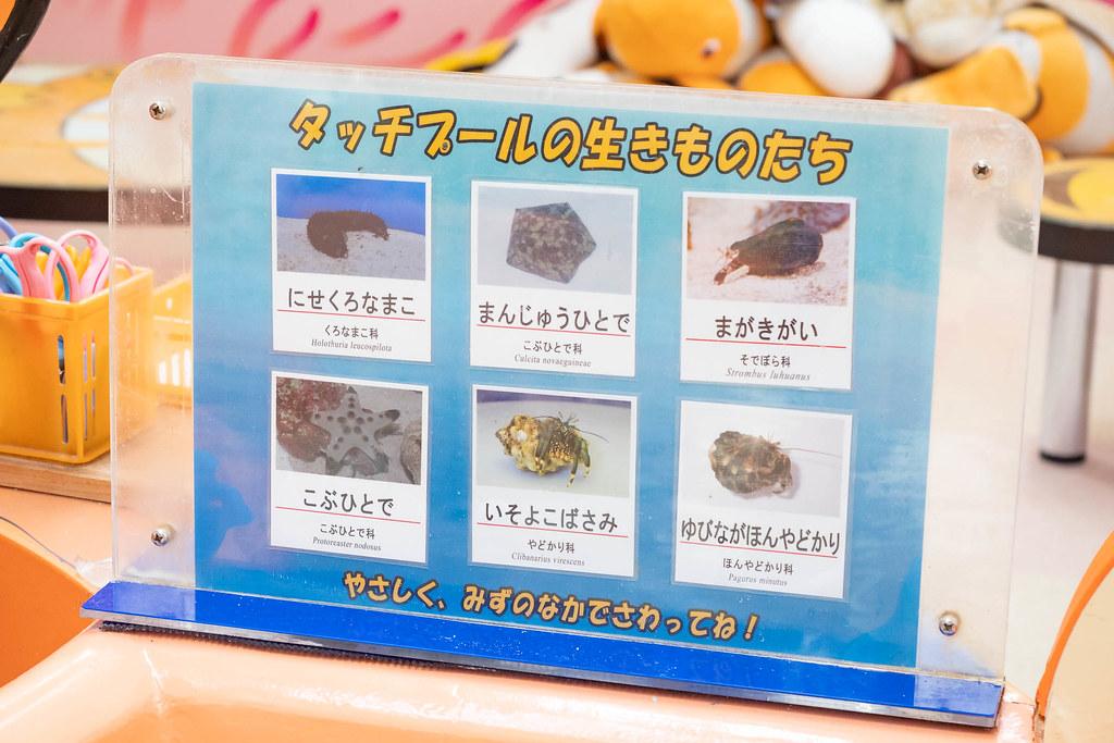 Tokaidai_Marine_Science_Museum-5