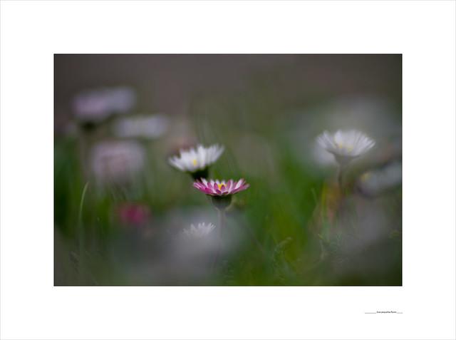 Esas pequeñas flores
